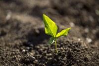 INESC TEC quer aumentar a eficiência do uso de água em agricultura