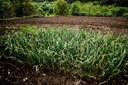 Sensores portugueses poupam água na produção agrícola (Público)